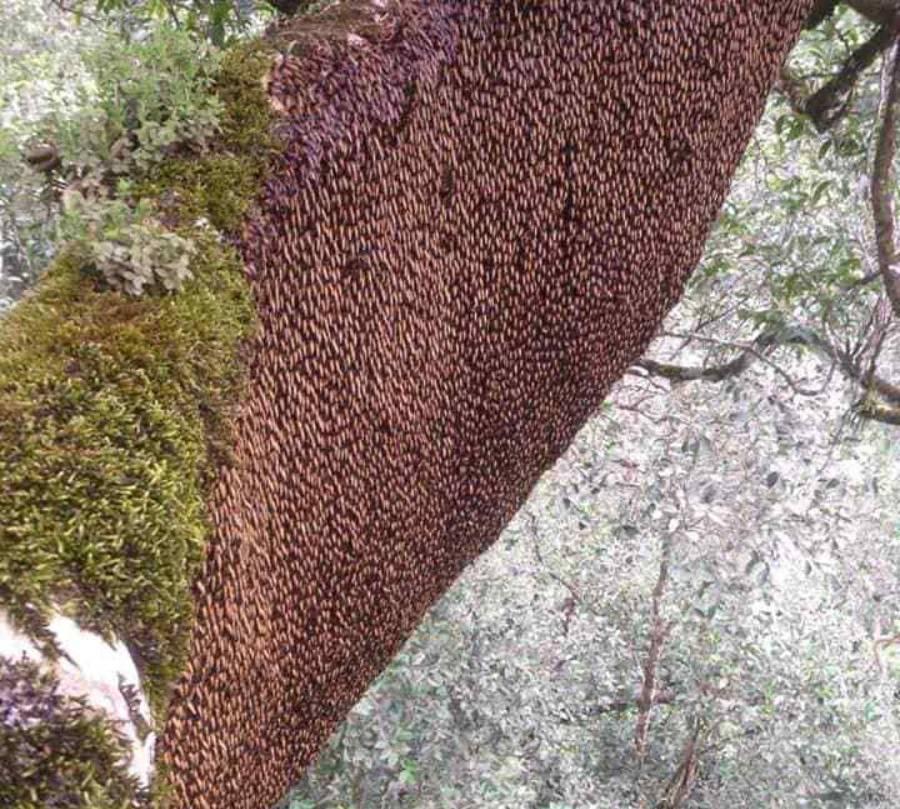 ong-khoai-viet